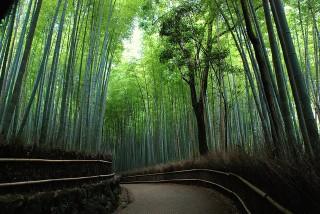 和を重んじる日本らしいマーケティングが、実践の成功の秘訣。
